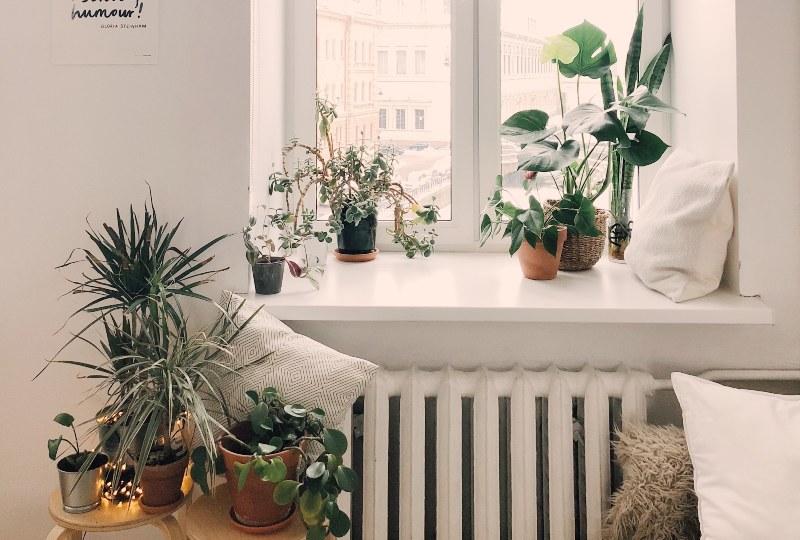 piante de casa